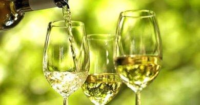 Aumento das vendas de vinho verde reforça necessidade de dinamizar enoturismo na região